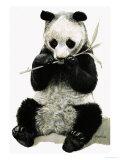 Panda Giclee Print by R. B. Davis