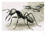 Ants Giclee Print by R. B. Davis
