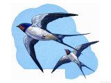 Swallows Giclee Print by R. B. Davis