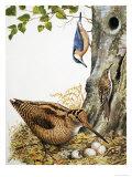 Woodland Birds Giclee Print by R. B. Davis