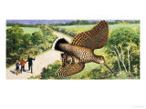 Looking at Nature: The Woodcock Giclee Print by R. B. Davis