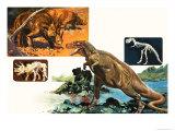 Dinosaurs and Skeletons. Stegasaurus and Tyranosaurus Giclee Print