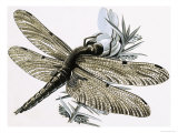 The Dragonfly Giclee Print by R. B. Davis