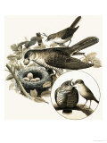 The Cuckoo Giclee Print by R. B. Davis