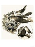 The Cuckoo Giclee Print by R. B. Davis