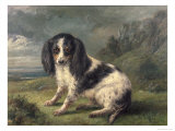 King Charles Spaniel Giclee Print by William Ellis