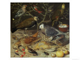 Still Life of Birds and Insects, 1637 Giclee Print by Georg Flegel