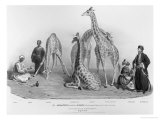 Giraffes with the Arabs Who Brought Them over to Here, Zoological Gardens, Regent's Park, 1836 Giclee Print by George The Elder Scharf