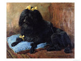Black Standard Poodle on a Blue Cushion, 1895 Giclee Print by John Emms