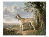 Terrier on a Path in a Wooded Landscape Giclee Print by Charles Towne