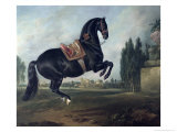 Black Horse Performing the Courbette Giclee Print by Johann Georg de Hamilton