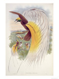 Bird of Paradise, from Birds of New Guinea Giclee Print by John Gould