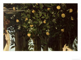 Primavera, Detail of the Orange Tree, c.1478 Giclee Print by Sandro Botticelli