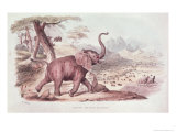 Hunting the Wild Elephant, Illustration from Wild Sports of South Africa by W.C. Harris, 1841 Giclee Print by William Cornwallis Harris