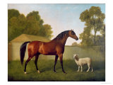 Dungannon, the Property of Colonel O'Kelly, Painted in a Paddock with a Sheep, 1793 Giclee Print by George Stubbs