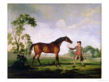 "The Duke of Ancaster's Bay Stallion ""Spectator"", Held by a Groom, c.1762-5 Giclee Print by George Stubbs"