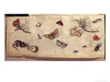Study of Various Insects, Fruit and Animals Giclee Print by Jan Van, The Elder Kessel