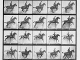 Man and Horse Jumping a Fence, Plate 640 from Animal Locomotion, 1887 Photographic Print by Eadweard Muybridge