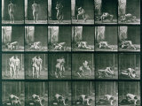 Two Men Wrestling, Plate 346 from Animal Locomotion, 1887 Photographic Print by Eadweard Muybridge