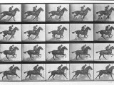 Galloping Horse, Plate 628 from Animal Locomotion, 1887 Photographic Print by Eadweard Muybridge