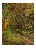 The Garden of Saint-Paul Hospital Poster von Vincent van Gogh