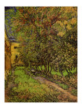 The Garden of Saint-Paul Hospital Print by Vincent van Gogh