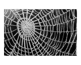 Spider Web Sparkle Art by  erichan