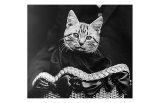 French Tabby Cat Poster by Mesh Gabriella
