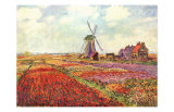 Tulips in Holland Prints by Claude Monet