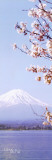 Japan - Mt. Fuji Posters