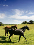 Horses are Shown at the New Bolton Center in Kennett Square, Pa Photographic Print