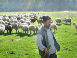 A Shepherd Stands by His Sheep in Miclosoara, Romania, October 2006 Photographic Print by Rupert Wolfe-murray