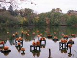 This Water Based Jack-O-Lantern Display in the Halloween Spectacular Photographic Print by Victoria Arocho