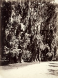 A Man Strolls Amidst the Majestic Trees of Chapultepec Park, Mexico Photographic Print