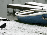 A Solitary Bird Walks Past a Boat Covered by Overnight Snow Photographic Print
