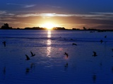 The Sun Sets as Sea Gulls Flies Over Flooded Argentina's Pampas Photographic Print