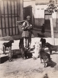 Turkish Man with a Basket on His Back Surrounded by Stray Dogs Photographic Print