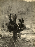 A Tree from Which WWI Italian Helmets Have Been Hung. Ronchi Dei Legionari, Gorizia Photographic Print