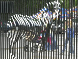 A Zebra on the Front Gate of the 75-Year-Old Zoo in Warsaw, Poland,June 24, 2003 Photographic Print by Czarek Sokolowski