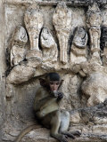 A Young Long-Tailed Macaque Sits Alone While Enjoying a Treat at Wat Prang Sam Yot Photographic Print by David Longstreath