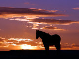 A Wild Horse Lingers at the Edge of the Badlands Near Fryburg, N.D. Fotografie-Druck von Ruth Plunkett