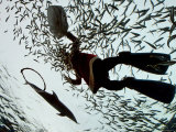 A Diver in a Santa Clause Costume Feeds Fish as Part of a Christmas Event Photographic Print by Junji Kurokawa
