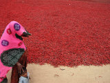 A Woman and Her Child Walks Past Drying Chilies Photographic Print