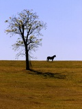 Standing in a Pasture Browned by a Lack of Rain, a Horse Surveys the Horizon on a Farm Photographic Print