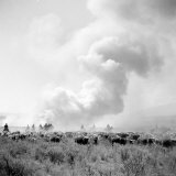 Cowboys of the Bannock Shoshone are Working Hard to Keep Ahead of This Prairie Fire Photographic Print