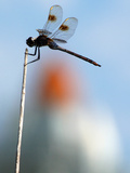 A Dragonfly Sits on a Weed Near the Space Shuttle Discovery Photographic Print