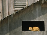 A Barn Cat Basks in the Sunlight Photographic Print