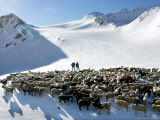 Herders Survey Their Flock Photographic Print