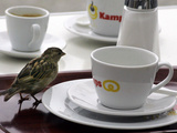 A Sparrow Trips Over a Tray Photographie