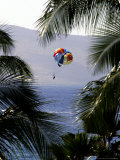 A Person on a Parasail is Framed by Palm Trees Photographic Print